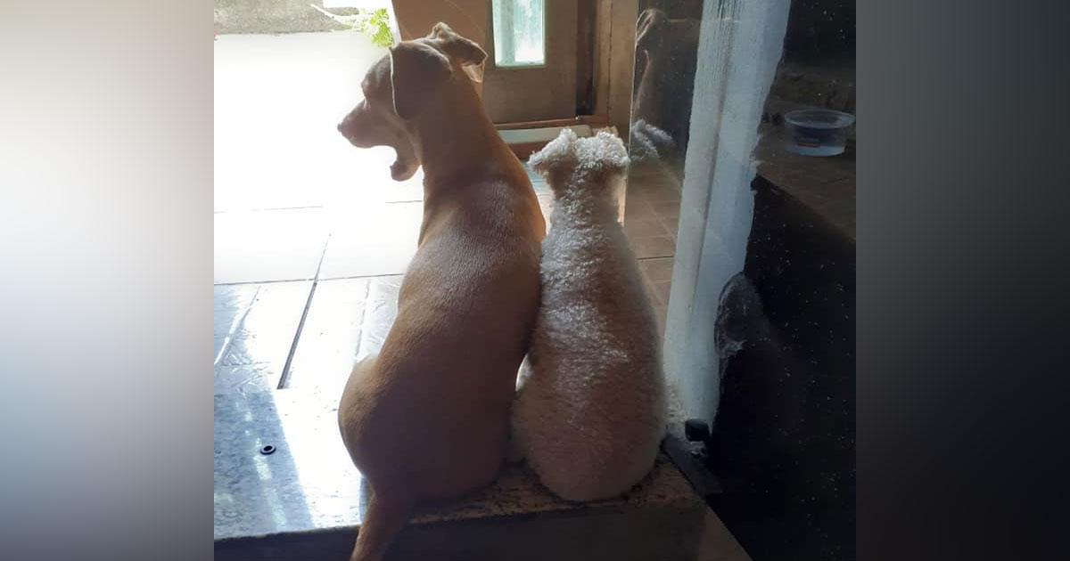 amizade entre cães