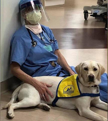 Cão terapeuta com profissional de saúde sentados em corredor de hospital