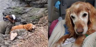 Cachorro sendo resgatado de lago e cachorro voltando pra casa em carro