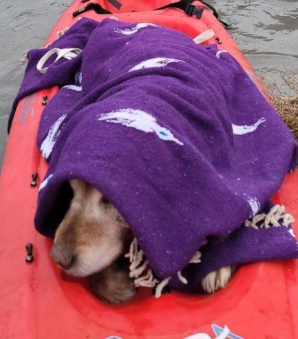 Cachorro enrolado em lençol