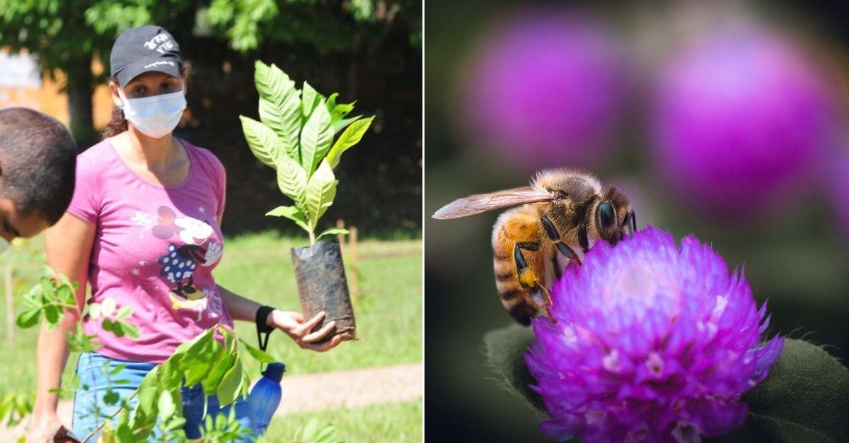 corredor-de-abelhas-brasilia