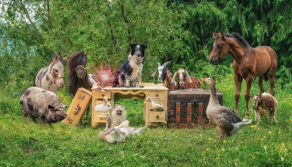 familia e seus animais 14