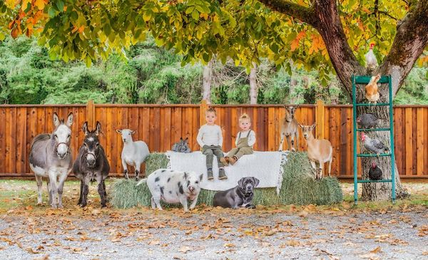 familia e seus animais 23