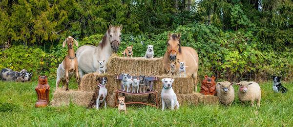 familia e seus animais 25