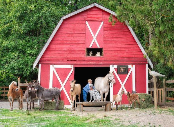 familia e seus animais 27