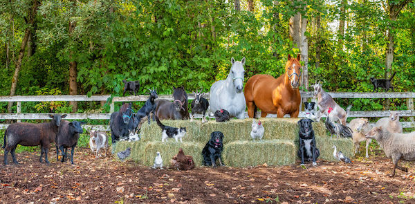 familia e seus animais 28