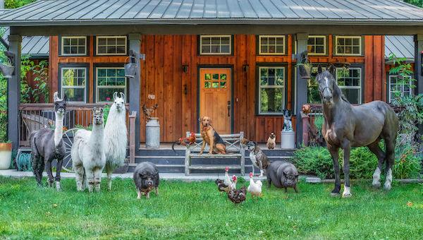 familia e seus animais 29