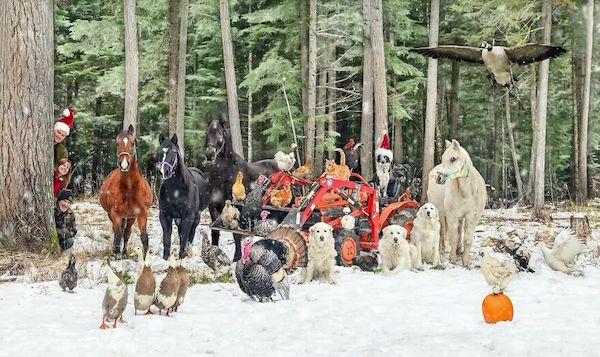 familia e seus animais 7