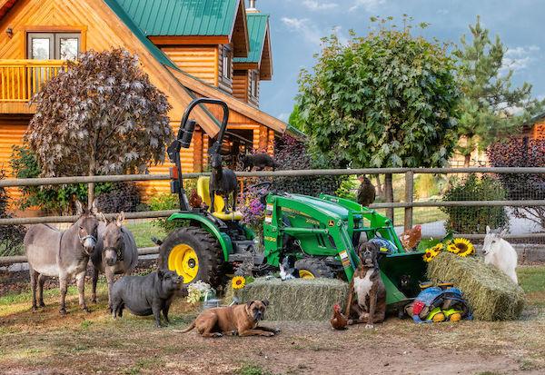 familia e seus animais 9