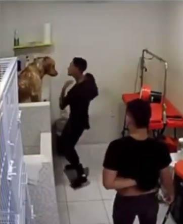 funcionário pet shop dançando com cachorro