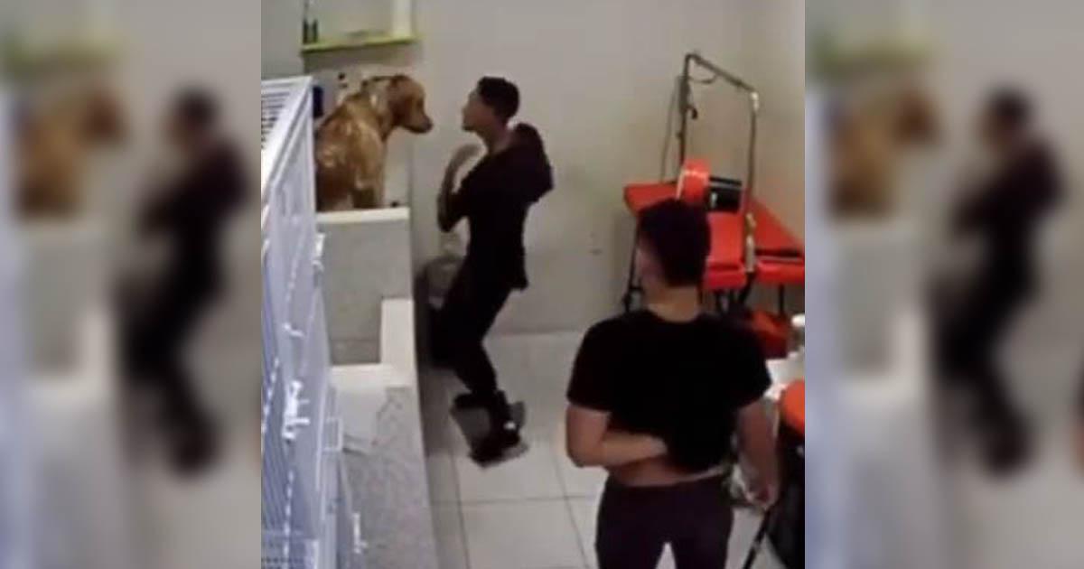 Funcionário de pet shop dança com cachorro durante banho, viraliza e conquista o coração da web 2