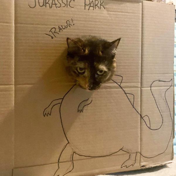 gatos dinossauros 9