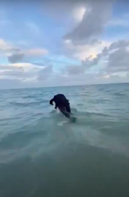 Homem mergulhando de terno e gravata no mar