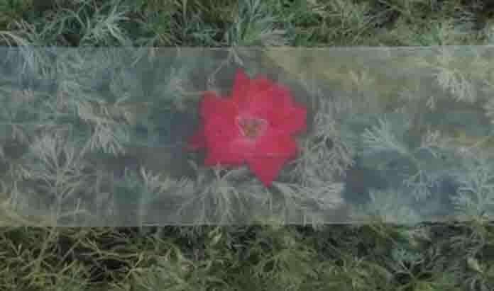 madeira transparente sobre flor