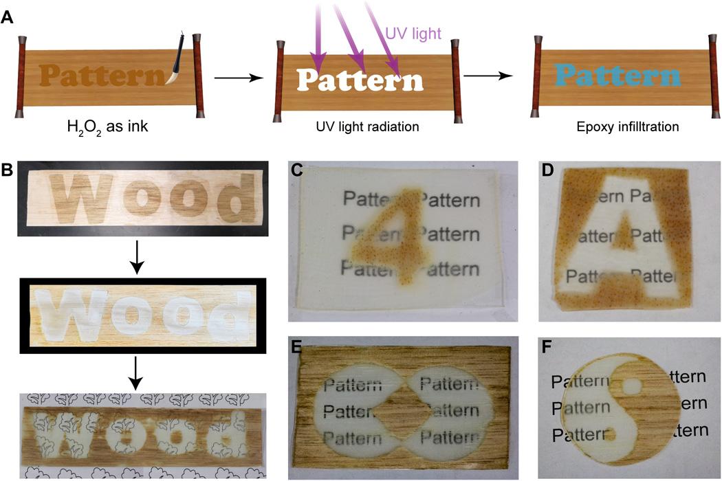 processo fabricação madeira transparente