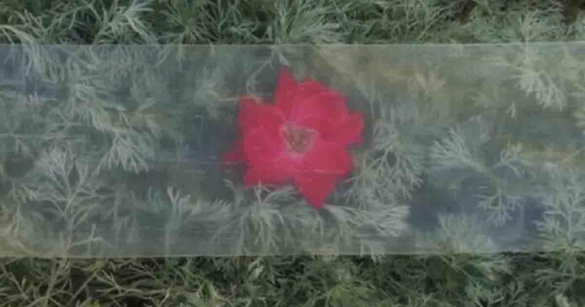 Você conhece madeira transparente? Material é mais resistente, leve e durável que o vidro 1