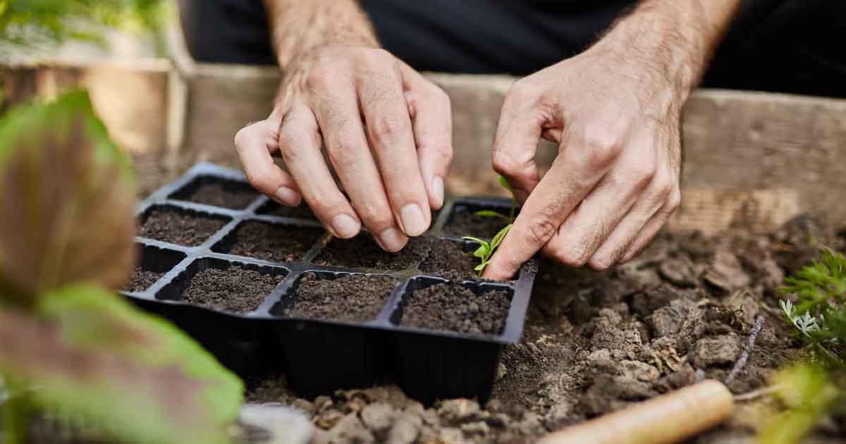 Alunos desenvolvem kit de plantio que ensina a fazer horta em casa ou apartamento 1
