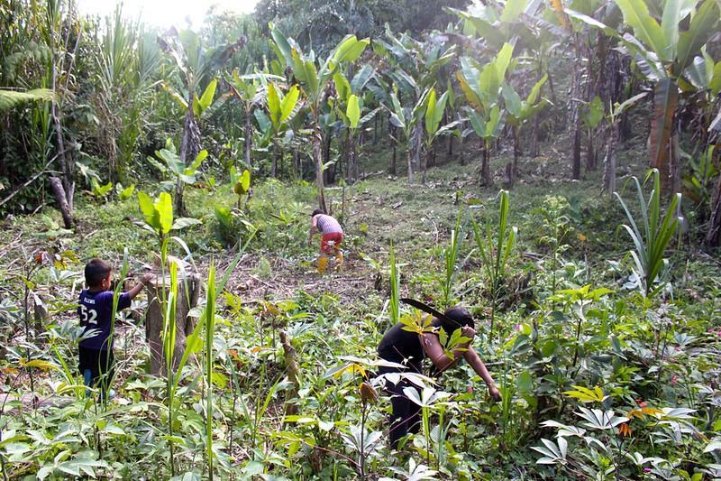 mulheres indígenas plantando árvores amazônia equatoriana