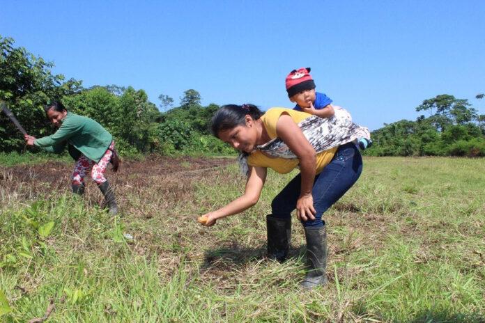 mulher indígena plantando semente árvores amazônia equatoriana