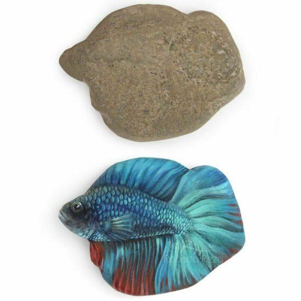 Peixe na pedra