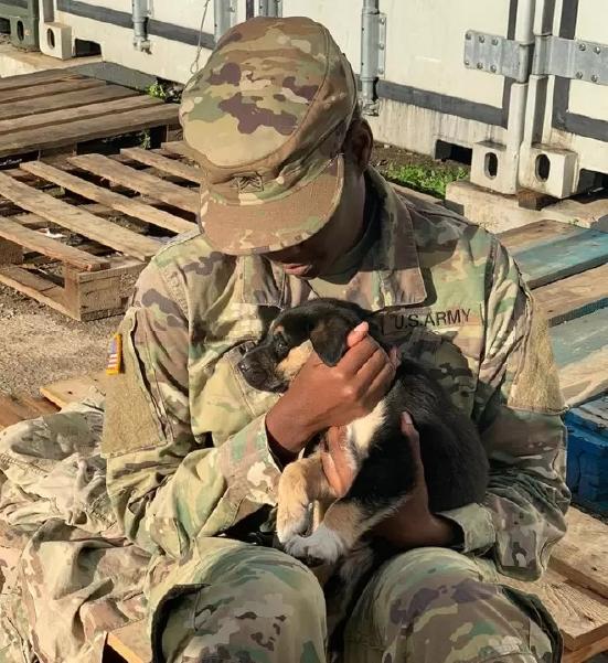 Soldado adota cão em missão no exterior