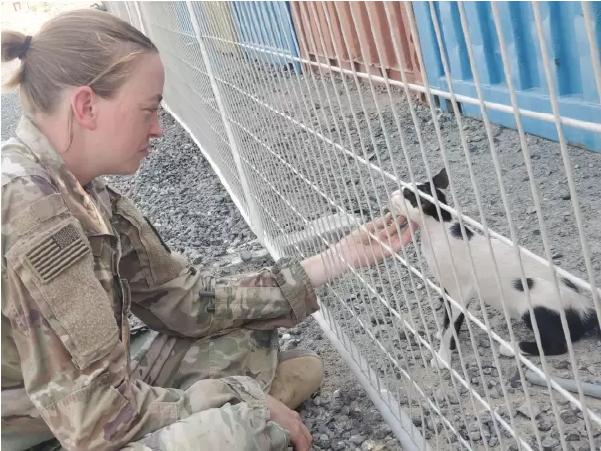 resgate da Paws of War - Na foto, Sargento Etter com um dos gatos que foram resgatados e levados de volta para os EUA