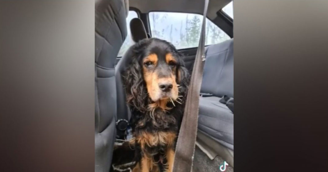 Cachorro abandonado em carro