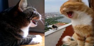 Gatos e corvos não têm conversas muito amistosas