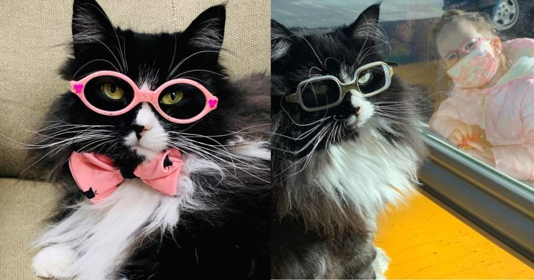 Gatinha é _contratada_ como modelo para incentivar crianças a usarem óculos nos EUA