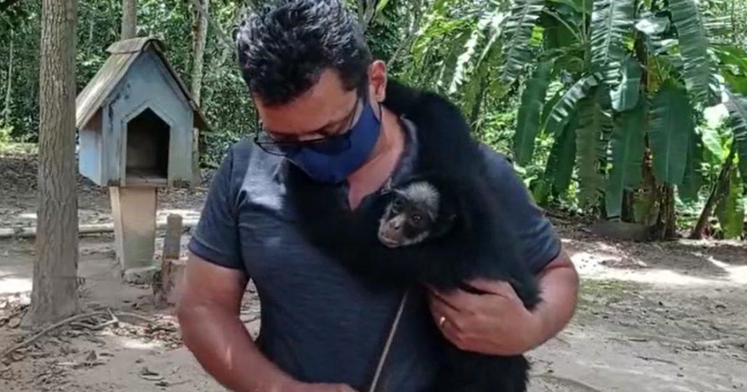 Macaco-aranha preso há mais de 20 anos é salvo em fazenda do MT