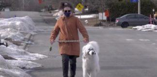 Cachorra para carro no meio da rua para ajudar sua dona que havia passado ma