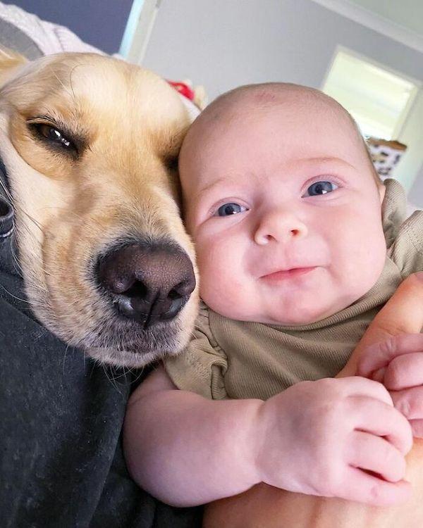 amizade golden e bebe 10