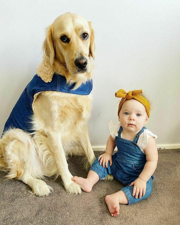 amizade golden e bebe 15