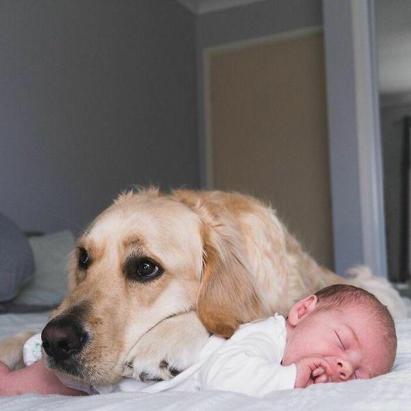 amizade golden e bebe 2