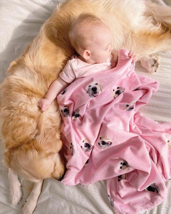 amizade golden e bebe 3
