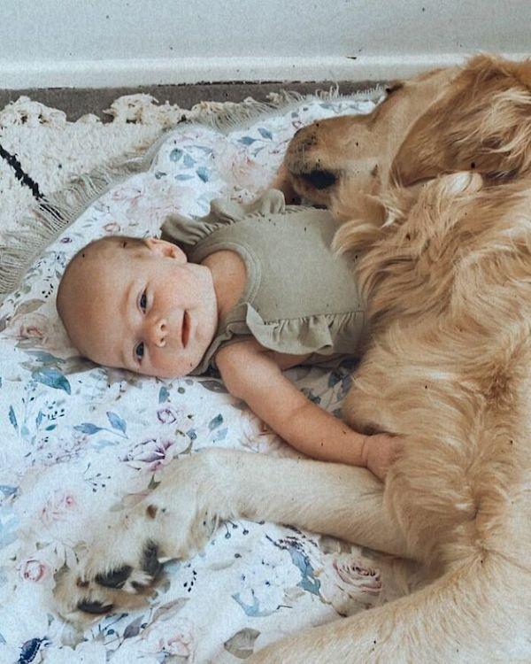 amizade golden e bebe 8