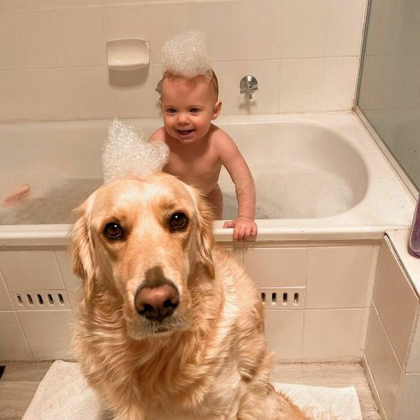 amizade golden e bebe 9