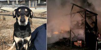 cachorra alarme incendio capa
