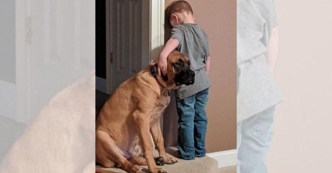 cachorro companhia castigo capa