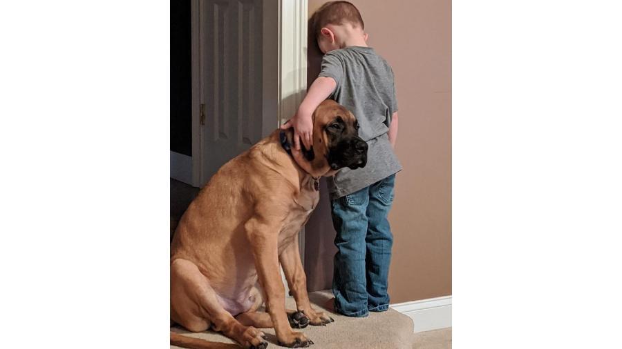 cachorro companhia castigo