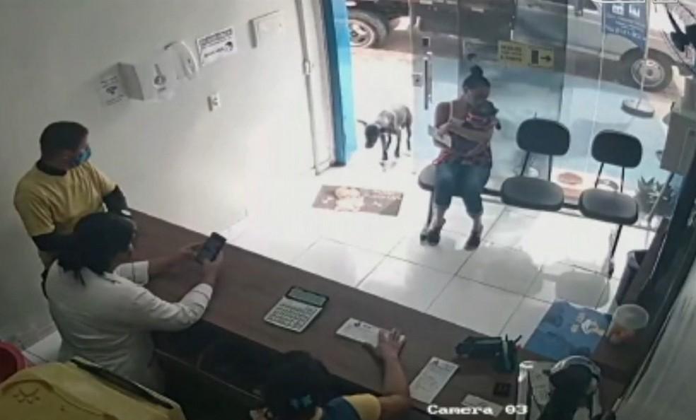 cachorro feriado entra em clínica sozinho