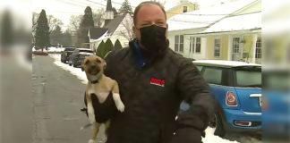 repórter segura cadela colo durante reportagem