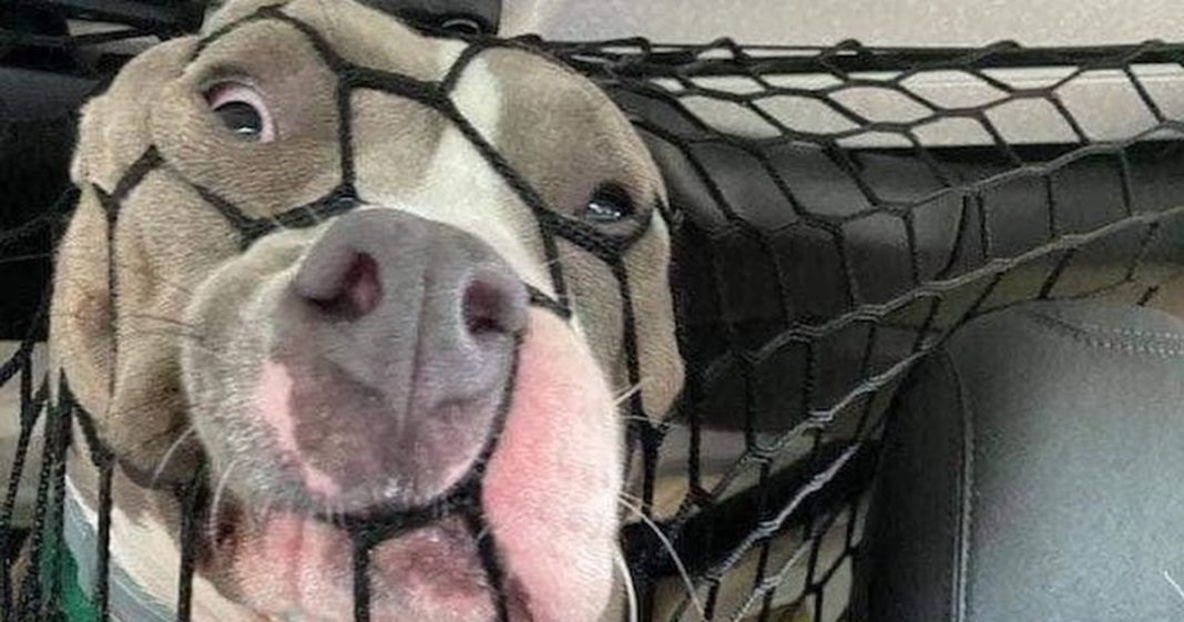 Cachorro brinca com rede em carro e fotos viralizam