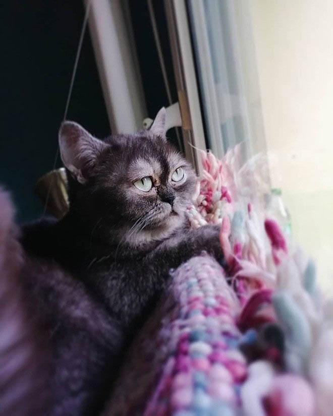 Gata deitada em tecidos coloridos olhando pela janela