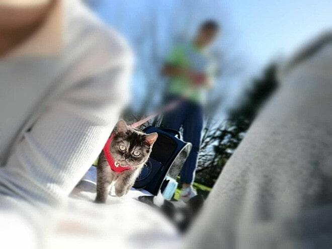 gata passeando calçada presa coleira