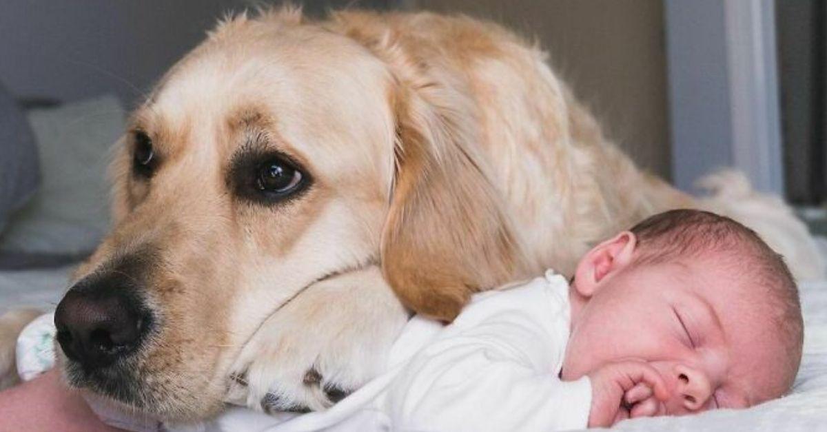 golden e bebe
