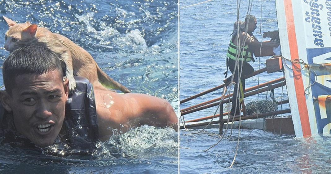 marinheiro salva gatos barco afundando tailândia