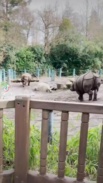 animais em zoológico dos EUA