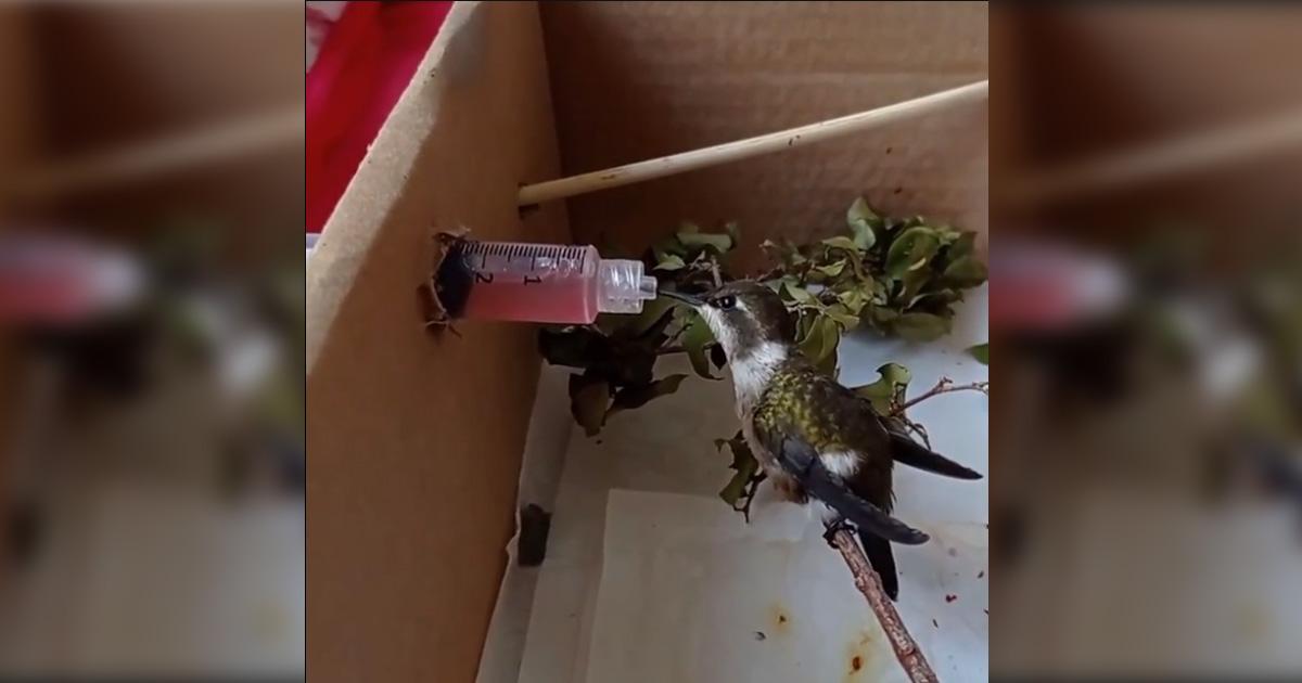 filhote de beija-flor experimenta novo suplemento alimentar