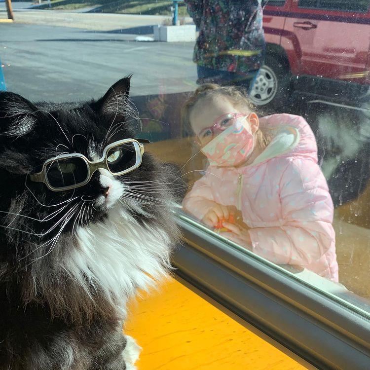 gatinha de óculos